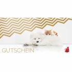 Anifit 10 EUR Gutschein ONLINE (1 Piece)